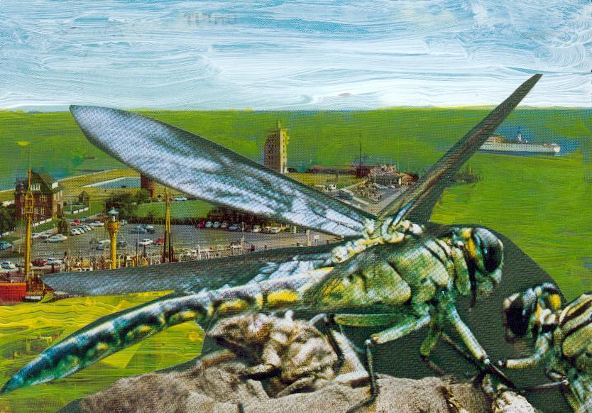 Insektenattacke auf Cuxhafen